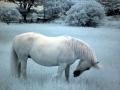 """""""Bo's Pony"""" by Beth Trepper, 2016"""